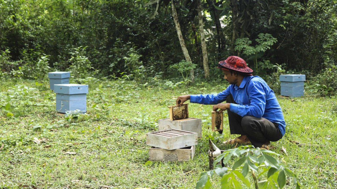 Daily Maintenance Of Hives